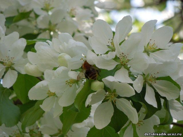 Картинки живая природа весной